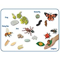 Insect Lore Life Cycle Stages Collection