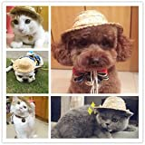 SLB Works Brand New Fashion DIY Pet Dog - Best Reviews Guide