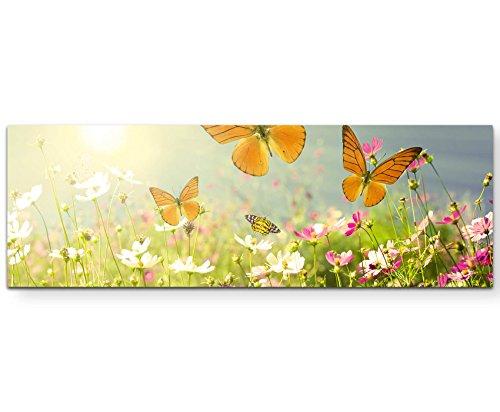 Paul Sinus Art Leinwandbilder | Bilder Leinwand 150x50cm Schmetterlinge auf Einer Blumenwiese im Sommer