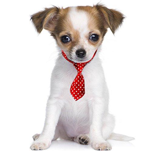 Spots Stil Fancy Kleid süsse Haustier Hund Katze Mini Hals Krawatte (Hund Minnie Maus Kostüm)