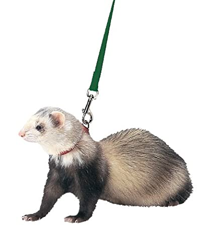 Marshall Ferret Harness and Lead, Hunter Green