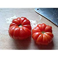GEOPONICS 1000pcs: Organic100Pcs Híbridos Suntoday AGUA Tomate Lycopersicon de la herencia