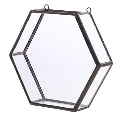 MagiDeal Glas geometrische Terrarium Box Sukkulent Pflanze Pflanzer Wand Dekor - schwarz - Schwarze Wand-box