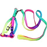 #5: National Pet World Dog Cat Rainbow Colorful Adjustable Nylon Puppy Leash Harness Size- Small