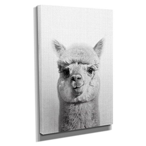 Nerdinger Llama Portrait - Kunstdruck auf Leinwand (40x60 cm) zum Verschönern Ihrer Wohnung. Verschiedene Formate auf Echtholzrahmen. Höchste Qualität.