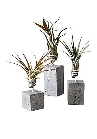 EVRGREEN   Luftpflanzen Set Deko Beton anthrazit   Dekoration für Badezimmer
