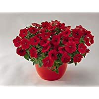 PlenTree 3 Pot semilla de la Red de Terciopelo Fã¡Cil de Onda de la Petunia HãBrida