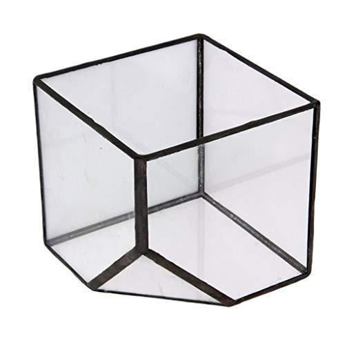 Tubayia Glas Geometrisches Terrarium Cube Gewächshaus Blumentopf Pflanzgefäß für Haus Garten...