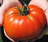 Fash Lady Beefsteak Tomaten 100 Samen Riesige Non GMO ez wachsen E73