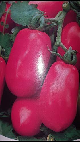 Portal Cool Tomate Rome Poire Sauces Spã©Ciales 500 Graines