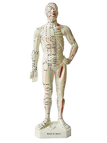 Akupunktur-Modell Mann 26 cm, TCM Akupunktur-Figur aus Weichvinyl, Anatomie-Modell mit farblich angelegte Akupunkturpunkte und Meridiane