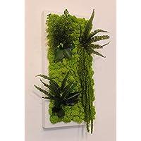 Quadro Vegetale - 40 x 20 cm - Verde 15 - Edera-Felce-Amaranthus-Capelvenere