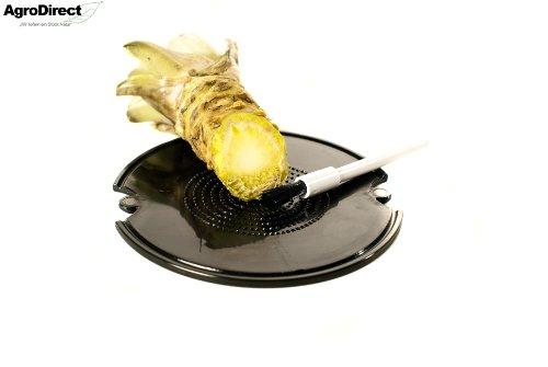 AgroDirect Wasabi- Reibe inkl. Pinsel (Auch für Ingwer und Knoblauch geeignet) / Vergleichbare Pürierung als mit einer Wasabireibe aus Haifisch-, bzw. Rochenhaut ! (Ingwer Pinsel)