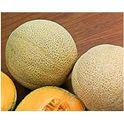 """Premier Seeds Direct ORG070 organische """"Hales Best Jumbo"""" MelonenSamen (Packung mit 50)"""