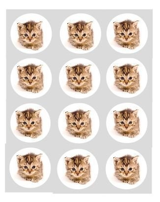 12-Chaton-Chat-tigr-papier-de-riz-fe-cup-cake-40mm-toppers-Pr-Dcoup-dcoration