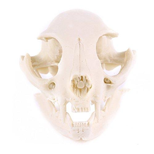VORCOOL Harz Fortune Cat Skull Skeleton Modell