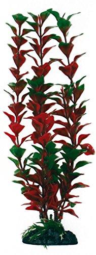 wave-ludwigia-plante-classique-pour-aquariophilie-taille-m