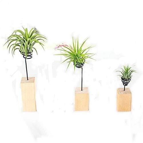 Jun 3 pcs Air Lot de support en 3 tailles, bois, Base pour réservoir à air Plante support de table support de pot de fleurs Vase Pot pour suspendre Air Plante Petite Tillandsia Mini Cactus imitation plantes d'intérieur murale Home Decor
