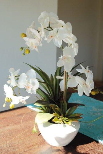 Blühpflanzen-Arrangement Farbe