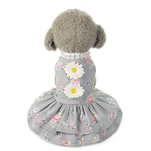 Hmeng Haustier-Kleidung❤️heißer Verkauf! Hund Katze Bogen Tutu Kleid Spitze Rock Pet Puppy Dog Princess Kostüm Bekleidung Kleidung (Grau, ()