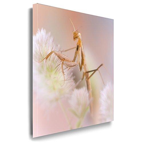 Julia-Art - Bilder Heuschrecke Grille Insekten Leinwand mit Keilrahmen 150 x 100 cm Leinwandbild XXL Wandbild Tiere Kunstdrucke Tierwelten Bild Wanddesign Wanddekoration c-642v-77 -