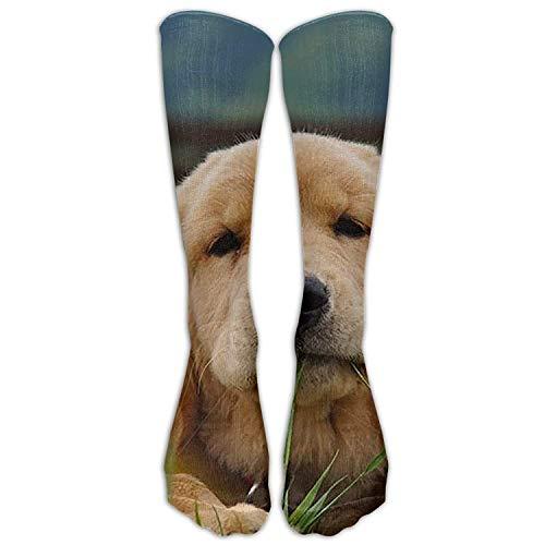 Personalisierte kühle Winter-warme Strümpfe kleiden golden retriever-Hund über der Eignungs-kniehohen Socke der Waden-Rohr-Frauen an