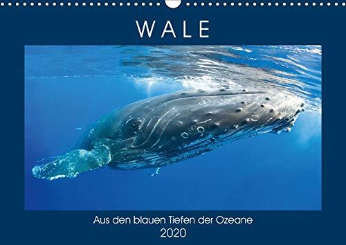 Wale: Aus den blauen Tiefen der Ozeane (Wandkalender 2020 DIN A3 quer)