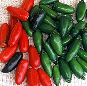 VISA STORE 500 Samen von Serrano Chili - Peperoni