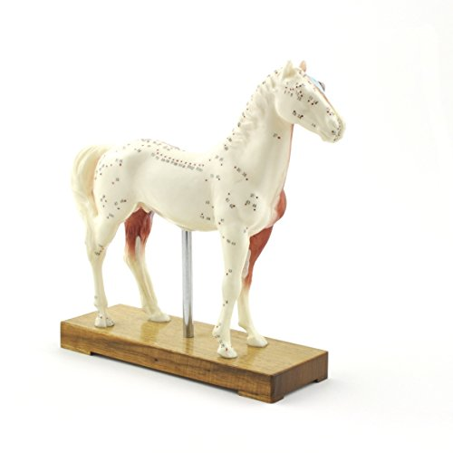 HeineScientific Akupunkturmodell Pferd