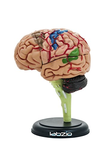 Labzio 4D Human Brain Model, Mini (10 cm Tall), Dissects Into 17 Parts, A Perfect Learning For Anatomy of Brain, A Fun Learning Model For Kids and Students
