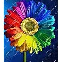 100 Unids/bolsa Mezcla de semillas de margaritas arcoiris, semillas de crisantemo, semillas de flores raras, crecimiento natural para la plantación de jardines domésticos