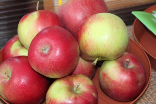Apfel Idared Viertelstamm wurzelnackt, 90 cm Stammhöhe inkl. Pflanzschnitt