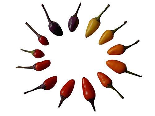 "Farmerly Bolivian Rainbow ~Tasty Ornamental Hot Pepper~""Capiscum Annuum"" 10+ Annual Seeds"