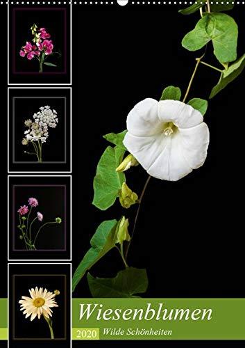 Wiesenblumen - Wilde Schönheiten (Wandkalender 2020 DIN A2 hoch): Leuchtende Wiesenblumen vor schwarzem Hintergrund (Monatskalender, 14 Seiten ) (CALVENDO Natur)