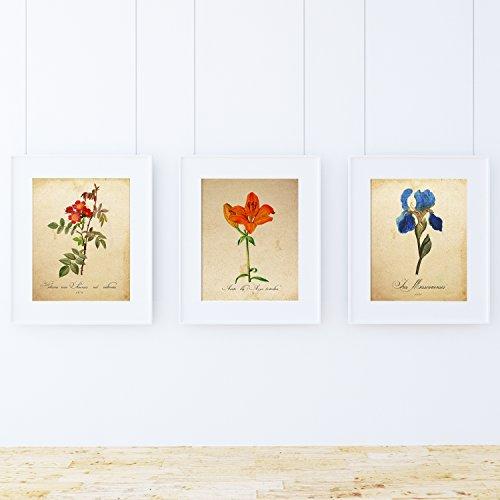 Pack de láminas MI JARDÍN AZUL. Tres láminas tamaño A4. Posters con imágenes de botánica. Decoración de hogar. Láminas para enmarcar. Papel 250 gramos alta calidad
