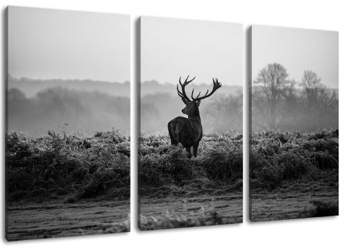 Hirsch - schwarz/weiss Motiv mit Farbelementen, 3-teilig auf Leinwand (Gesamtformat: 120x80 cm). Hochwertiger Kunstdruck als Wandbild. Billiger als ein Ölbild! ACHTUNG KEIN Poster oder Plakat!