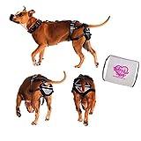Keuschheitsgürtel für Hunde, PET Anti-breeding System (PABS), X-Large