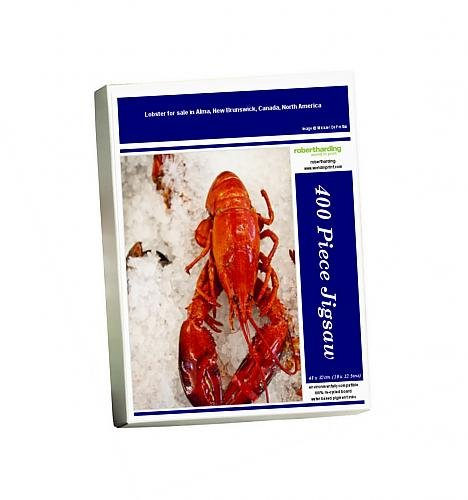photo-jigsaw-puzzle-of-lobster-for-sale-in-alma-new-brunswick-canada-north-america