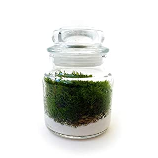 Pre-Assembled Mossarium Filled with Live Moss/Self Sustainable Sealed Landscape/Plant in Jar