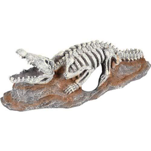 kelo Skelett Krokodil 20x8x6 cm ()