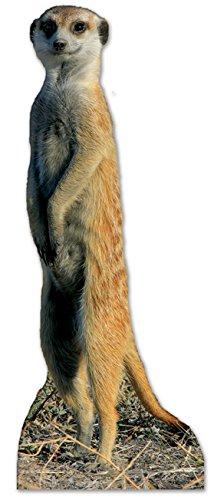 steller von Erdmännchen (Erdmännchen Kostüme Für Erwachsene)