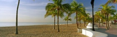 Panoramic Images - Palm trees on the beach Las Olas Boulevard Fort Lauderdale Florida USA Photo Print (91,44 x 30,48 cm)
