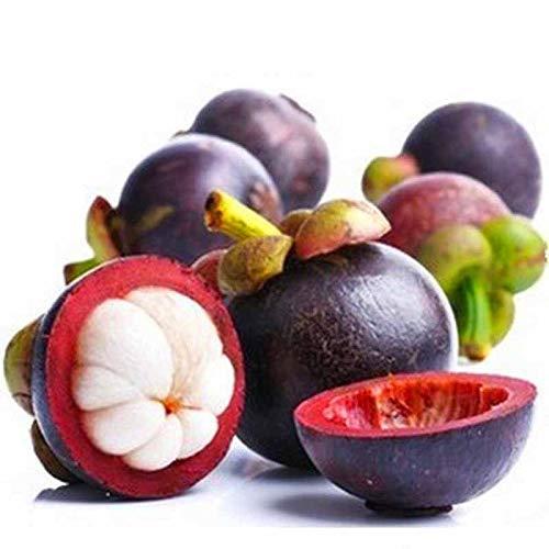 Buffyin Neu 10 Stück Mangostan Seedsnutrient-Rich Queen Of Tropischer Früchte Samen Heiß