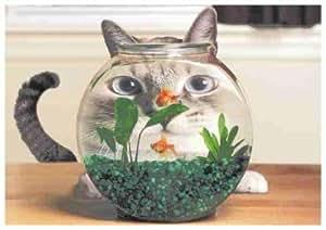 Postkarte Katze mit Goldfischen