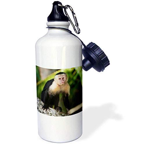 qidushop Trinkflasche für Capuchin, AFFE, Costa Rica, Edelstahl, isolierend, 535 ml