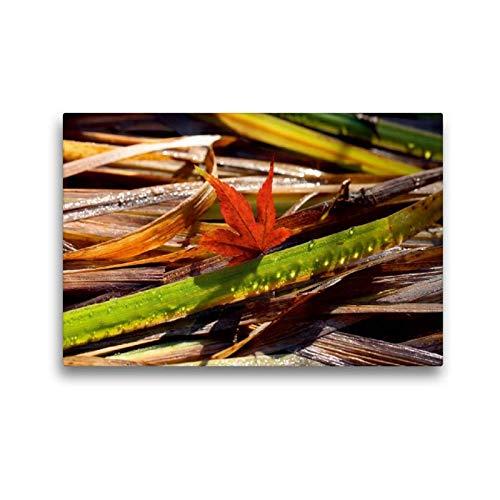 Calvendo Premium Textil-Leinwand 45 cm x 30 cm quer Ahornblatt mit Tropfen-Gras | Wandbild, Bild auf Keilrahmen, Fertigbild auf echter Leinwand, Leinwanddruck