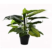 Artificial Plants About 50cm High Calla Plant Fake Leaves Flowers in Plastic Pot with Moss Grass Arrangement – Office Plants – Garden Plants – Indoor Plants