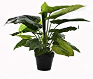 Artificial Plants About 50cm High Calla Plant Fake Leaves Flowers in Plastic Pot with Moss Grass Arrangement –