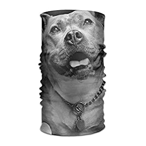 Walnut Cake Sturmhauben Magic Headwear Cool Pitbull Background Outdoor Scarf Headbands Bandana Mask Neck Gaiter Head Wrap Mask Sweatband