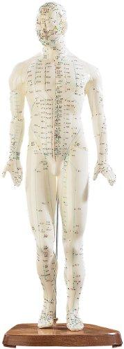 newgen medicals Akupunktur-Modell Mann